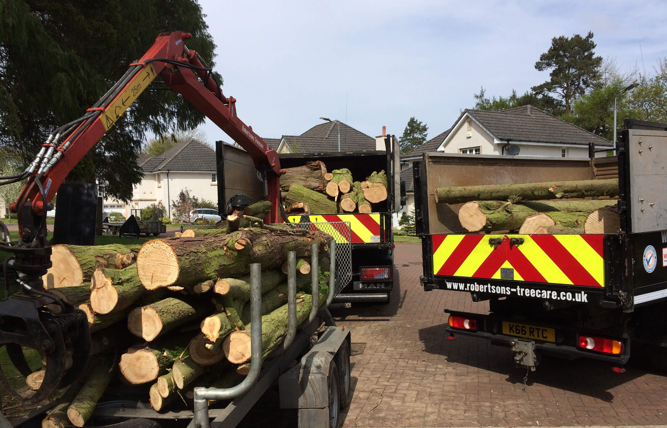 Trucks loaded with trees and ready to roll