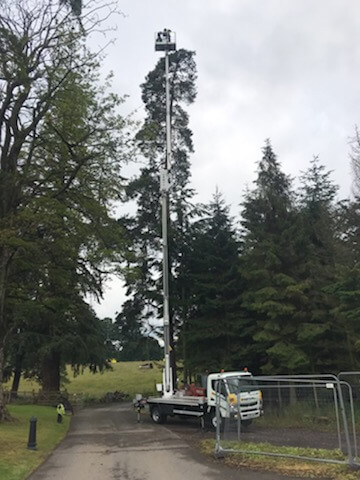 tree surgeon Stirling